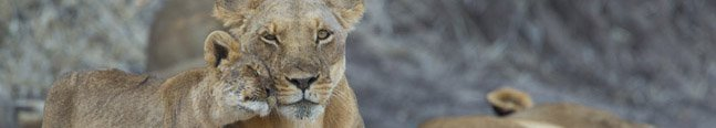 Contact Us - Robert Mark Safaris - Luxury African Safaris