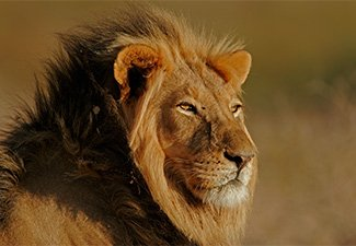 A Historic Rail Journey, Predator Cats & Victoria Falls - Robert Mark Safaris - Luxury African Safaris