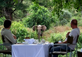 The Best of Cape Town and Singita - Robert Mark Safaris - Luxury African Safaris