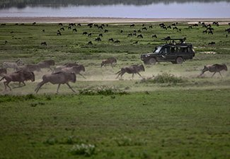 Game Migration and the Ngorongoro - Robert Mark Safaris - Luxury African Safaris