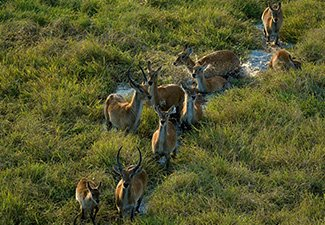 Central Zambia: Kafue and the Busanga Plains - Robert Mark Safaris - Luxury African Safaris