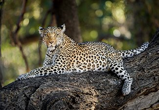 The Finest of Makgadikgadi & The Okavango - Robert Mark Safaris - Luxury African Safaris