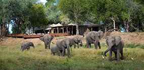 Ruckomechi Camp - Robert Mark Safaris - Luxury African Safaris