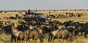 Rekero - Robert Mark Safaris - Luxury African Safaris