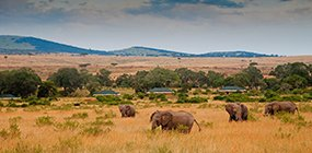 Sand River Masai Mara - Robert Mark Safaris - Luxury African Safaris
