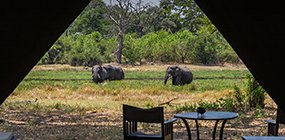 Machaba Camp - Robert Mark Safaris - Luxury African Safaris
