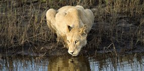 Little Vumbura - Robert Mark Safaris - Luxury African Safaris