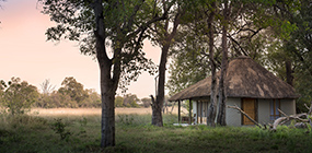 Khwai Bush Camp - Robert Mark Safaris - Luxury African Safaris