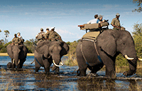 Luxury Group Safaris