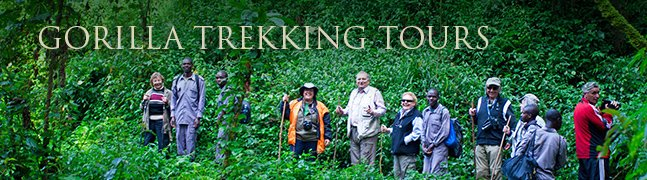 Gorilla Trekking Tours - Robert Mark Safaris - Luxury African Safaris