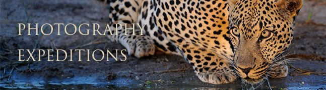 Photography Expeditions - Robert Mark Safaris - Luxury African Safaris