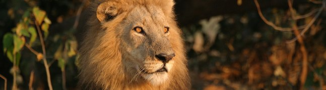 May - October - Robert Mark Safaris - Luxury African Safaris