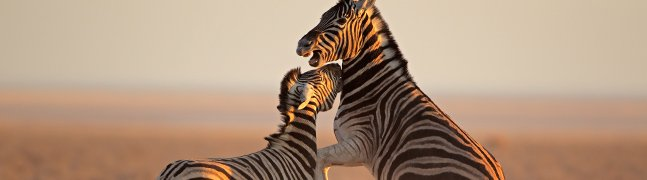 ETOSHA - Robert Mark Safaris - Luxury African Safaris