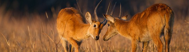 Kafue - Robert Mark Safaris - Luxury African Safaris