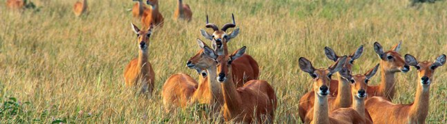 Queen Elizabeth National Park - Robert Mark Safaris - Luxury African Safaris
