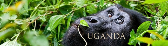 UGANDA - Robert Mark Safaris - Luxury African Safaris